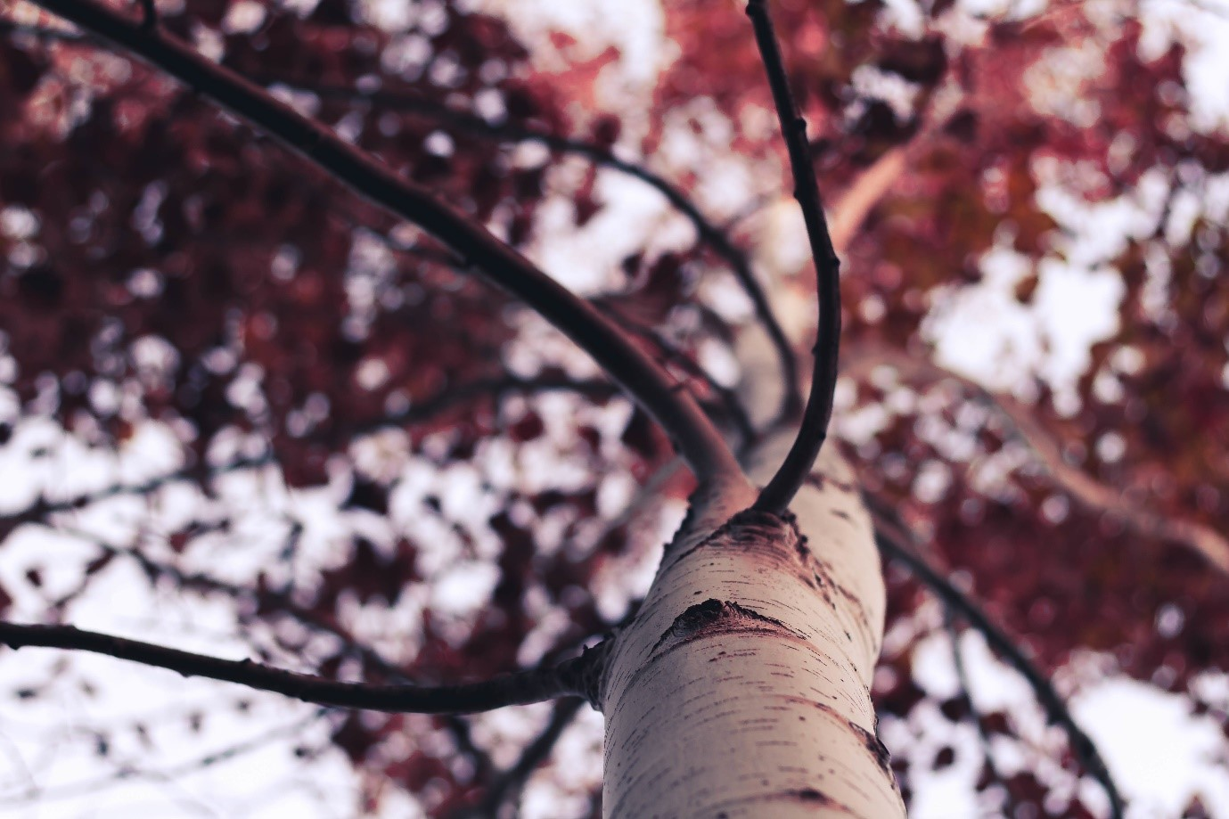 How to take good photos – photo of tree taken from below